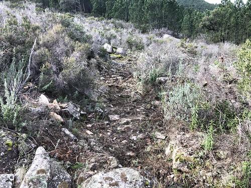 Travaux de restauration de l'ancien chemin de Luviu : arrivée dans la clairière après la piste annexe de Luviu