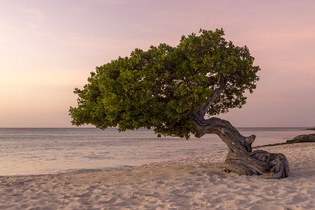Sunset on the Divi Tree