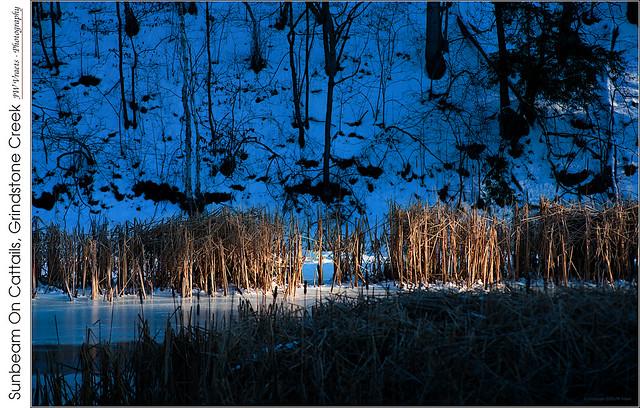 Sunbeam On Cattails, Grindstone Creek
