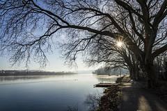 Winter at Lake Baldeneysee