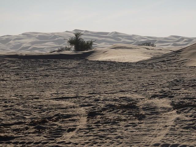 Algodones Dunes SR602085