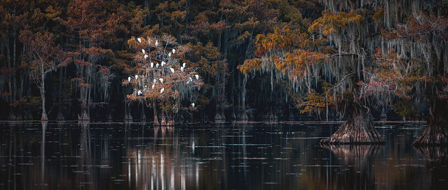Good night from beautiful Caddo Lake