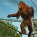 """<p><a href=""""https://www.flickr.com/people/44991205@N03/"""">Ostseeleuchte</a> posted a photo:</p>  <p><a href=""""https://www.flickr.com/photos/44991205@N03/49419956062/"""" title=""""Happy Dancer""""><img src=""""https://live.staticflickr.com/65535/49419956062_c496177f58_m.jpg"""" width=""""240"""" height=""""173"""" alt=""""Happy Dancer"""" /></a></p>  <p>Der fröhliche Tänzer<br /> - aufgenommen im Prag im Zoo -</p>"""