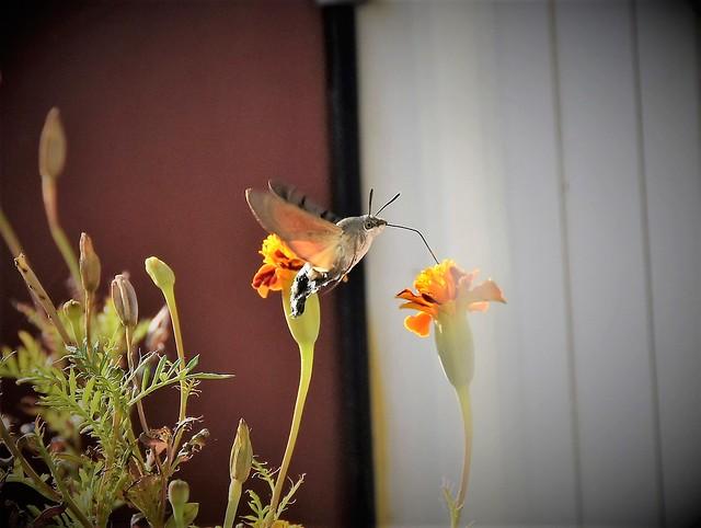 letjeti u mjestu ..  nježno doticiati