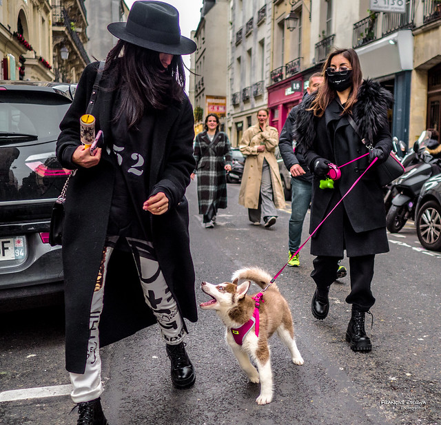Street - Dog attack !