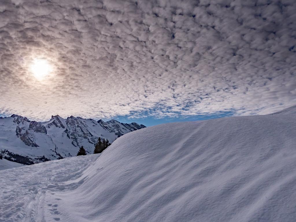 Soleil d'hiver... 49420088406_85a76abb53_b