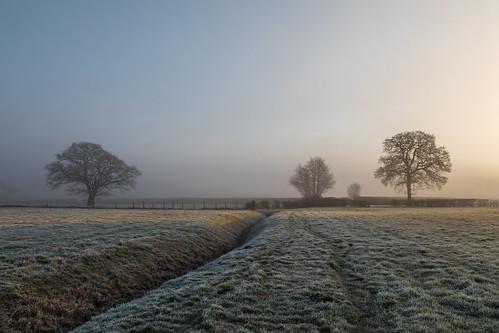 sunrise winchfield hampshire frost frosty fog lonetrees trees