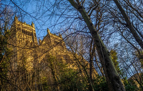 Durham Cathedral , through the trees. . .