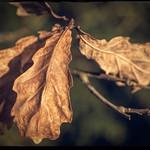 2020-021 Forever Autumn