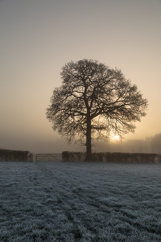 sunrise winchfield hampshire frost frosty fog lonetrees trees