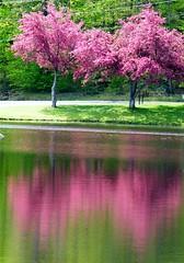 Pretty Spring Reflection