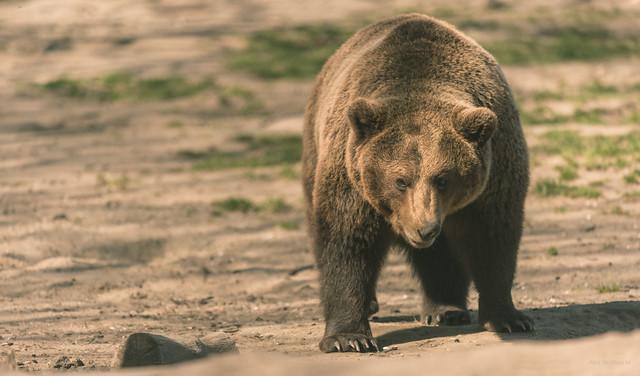 Forgot how to bear.