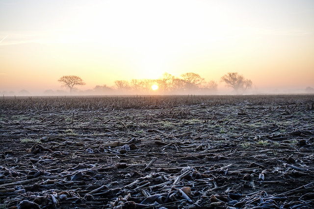 Winter sunrise on frosted corn stubble
