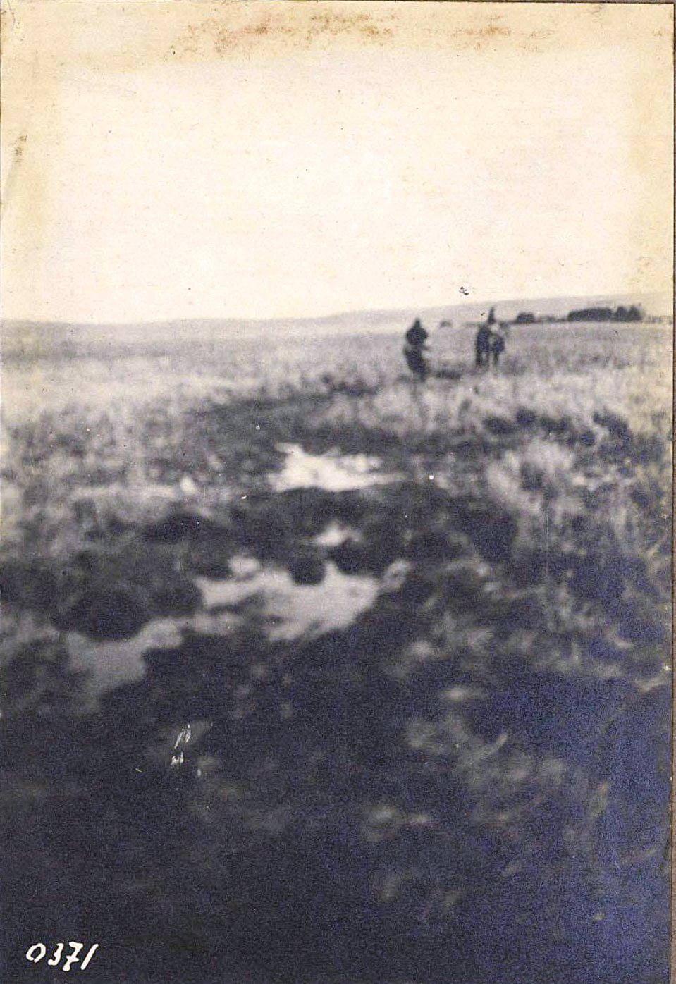 371. Марь по Аумскому лугу