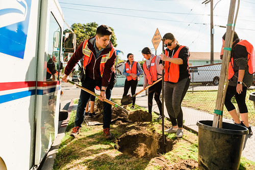 Bell Ave Tree Planting