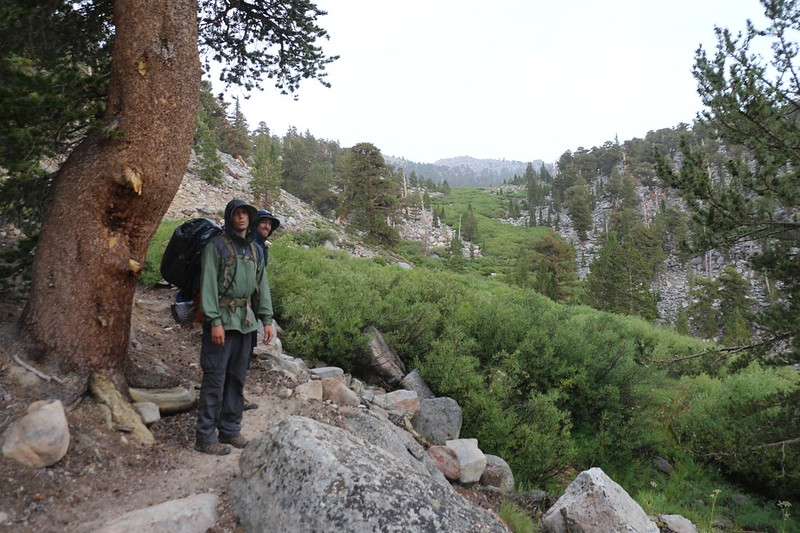 Yet another brief stop out of the rain under the shelter of a pine tree as we head east toward Cottonwood Pass