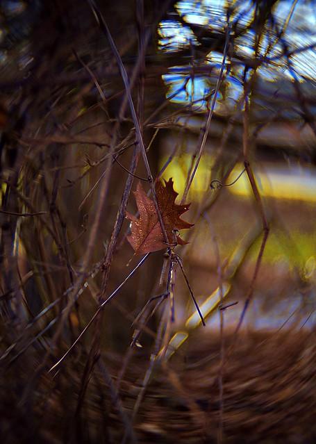 Glittering Leaf-HBW!