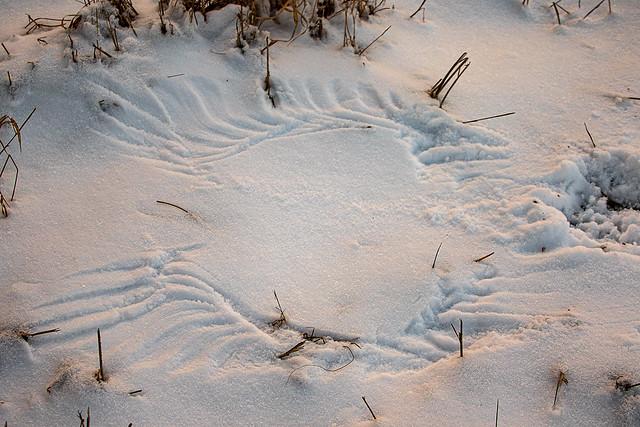 Bird Wings Snow Angel By Conrad Kuiper