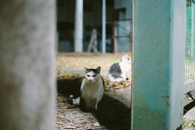 猫 2020/01/21 XE108353