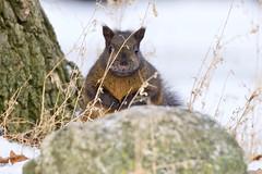 Happy Squirrel Appreciation Day