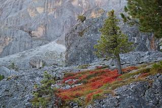 Sights of Fall y Jim