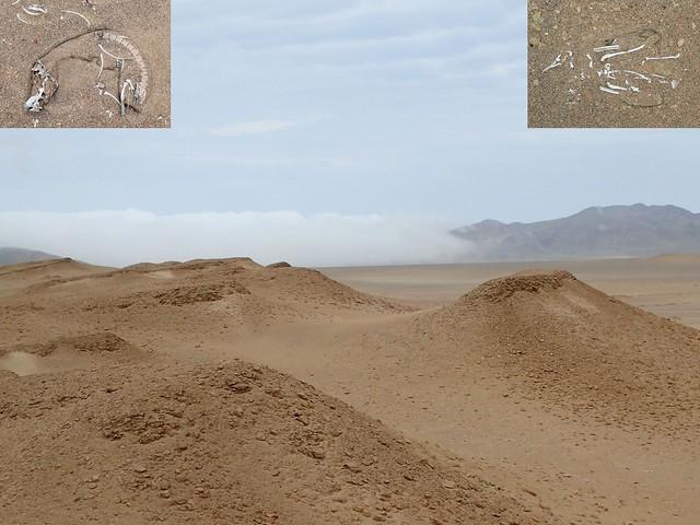 A Dry Place. Pacaras Desert and Skeletons, Reserva Nacional de Pacaras, Pacaras, Peru