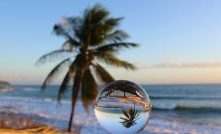 Palm (Explored)