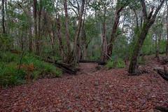 Gheerulla Creek