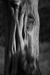Sadona Joshua Tree