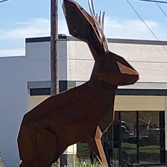Jackalope in Austin, TX