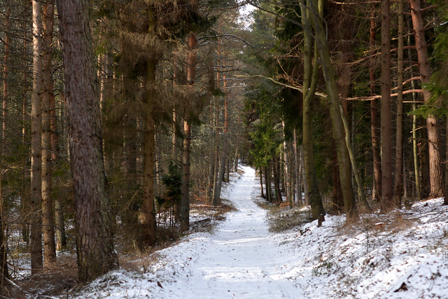 winding walkway through the forest