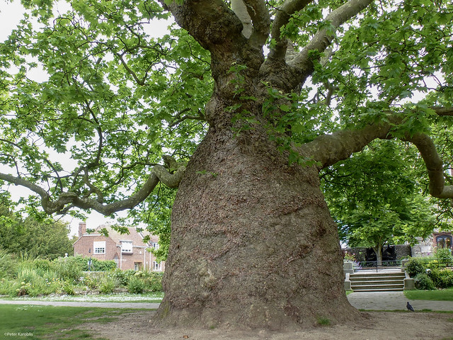 Canterbury Westgate Gardens