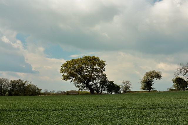 That tree (again)