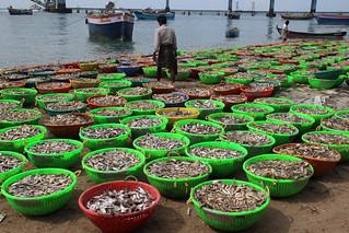 Unloading fish at Pamban Bridge