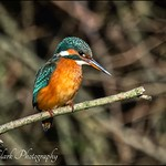 Kingfisher pose
