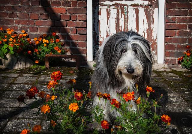 le nez dans les fleurs