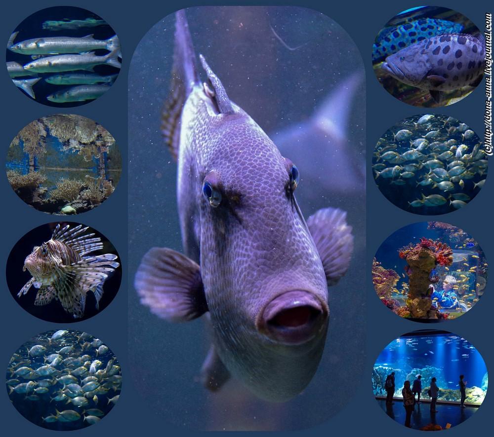 Aquarium-collage-a