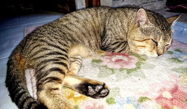 This Cat's My Tutor