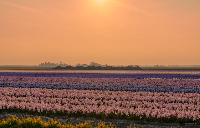 Layers of Holland.