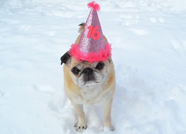 Happy Birthday Sweet Sixteen!