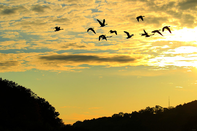 ~ ~ Early morning flight ~ ~