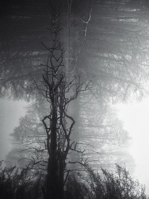 « Voyage dans le brouillard »