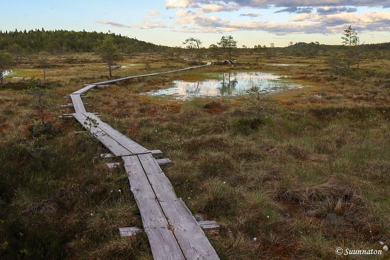 Torronsuon kansallispuisto, maisema