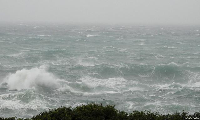 Storm Gloria 21-1-20