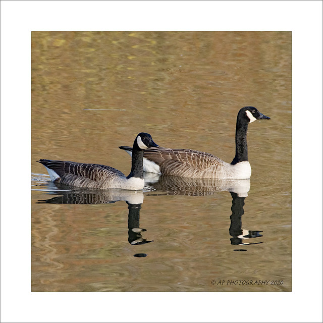 Canada Goose Double Reflection