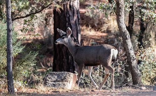 deer-20200122-109