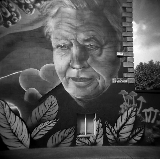 Dublin David Attenborough by Subset