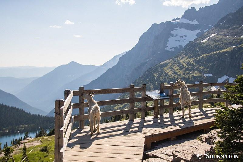 Glacierin kansallispuisto lumivuohet