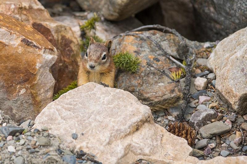 eläinten bongaaminen Kalliovuorilla
