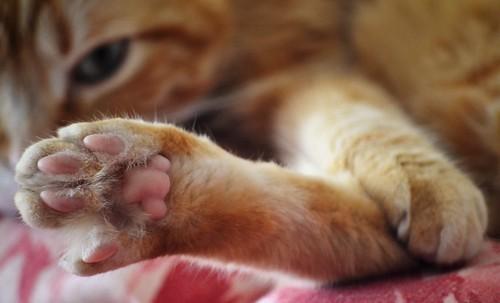 Spritz's paw 🐾❤️